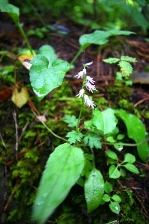 小さくて可愛い白い花。